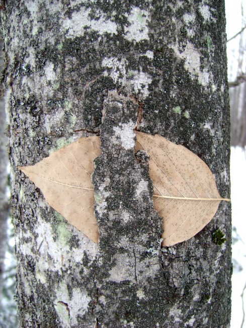 Leaf caught in tree