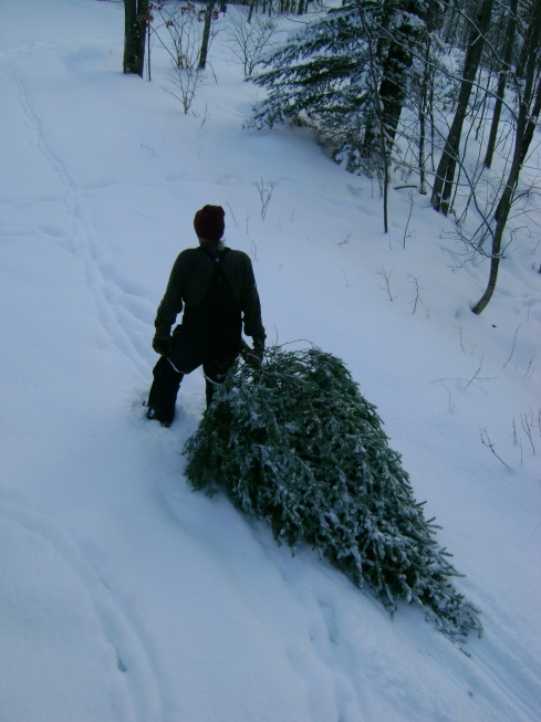 Pulling the Christmas tree into the woods