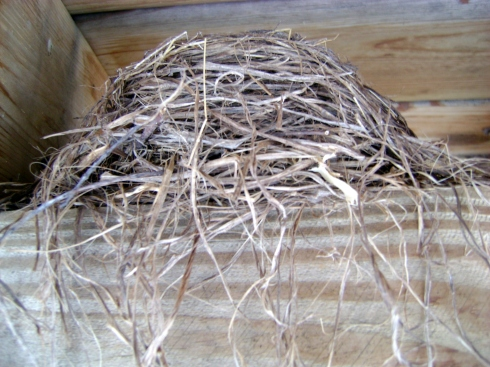 Abandoned robin's nest beneath our house