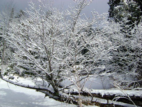 Snowy branches jutting across the river