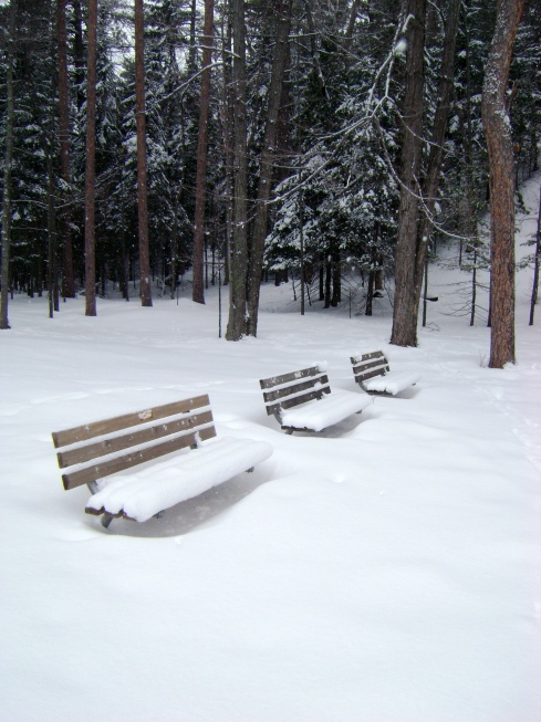 Do you separate the park benches from the trees and snow?  Are the benches artificial and everything else natural?