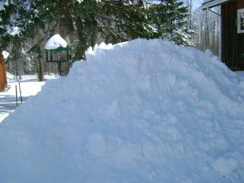 Seven to eight foot plowed pile of snow near the bird feeder