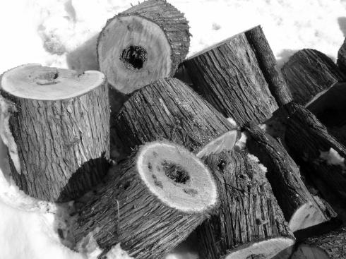 Precious cedar for kindling