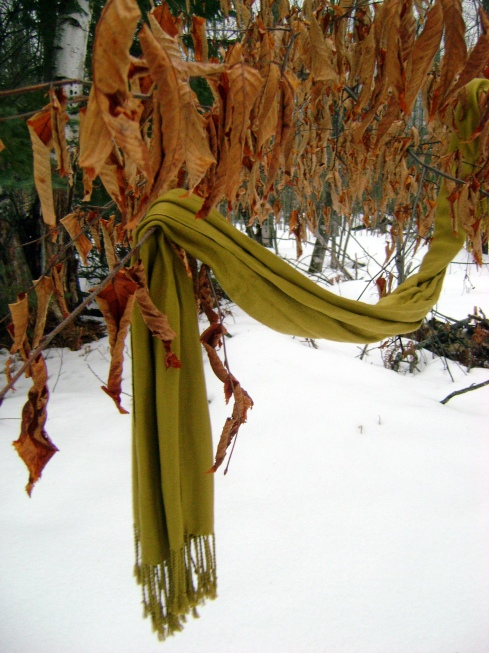 Scarf hangs amidst orange leaves on branch