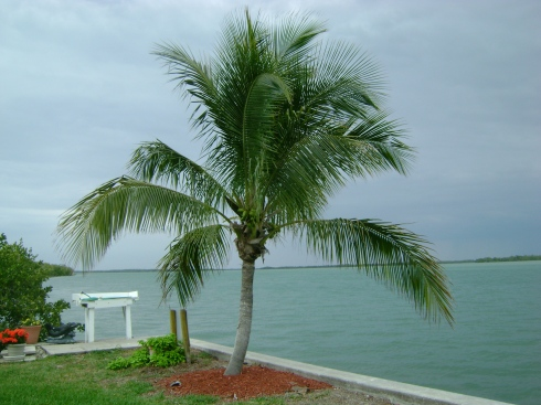 Palm tree branches waving in the breeze