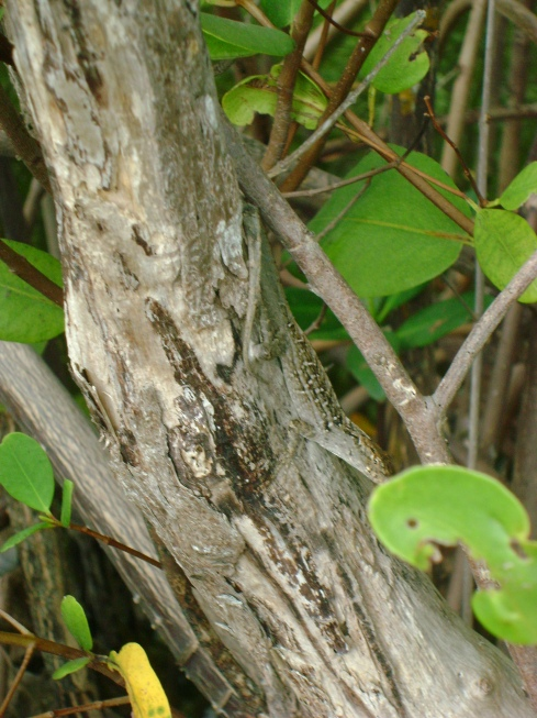 If you can find the skink...you win!