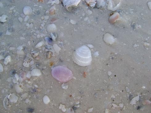 Shells underfoot