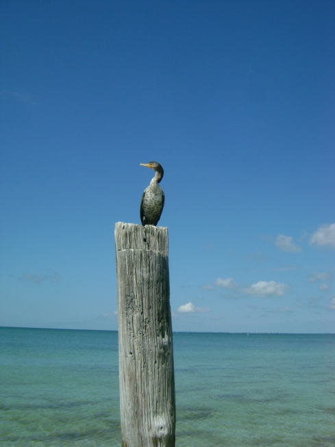 Waterbird sitting on post of once-massive Santini Pier