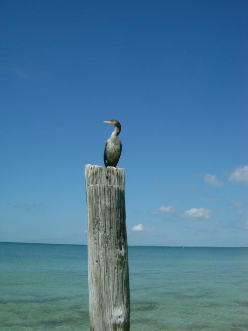 Waterbird sitting on post of once-massive Santini Pier