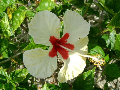 Tropical blossom