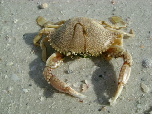 Ode to the crab which died recently