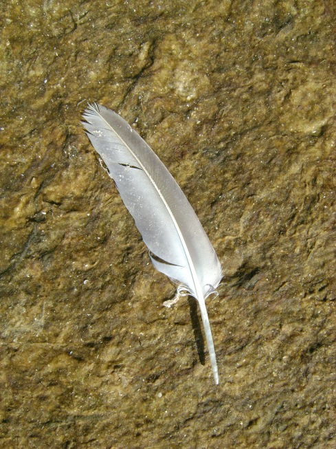 Feather in seaweed
