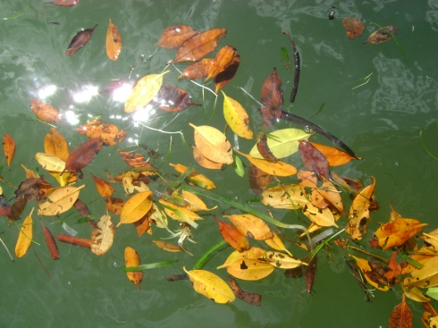 Leaves floating in water near boat