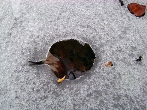 Look!  The leaf melted a perfect leaf-hole in the ice