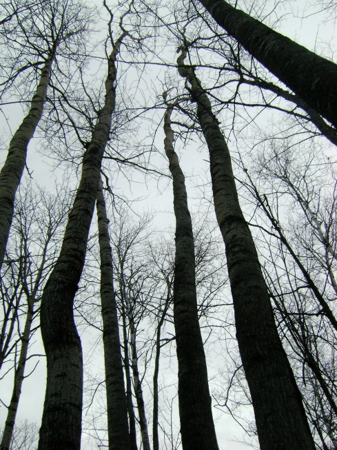 Looking up to a world of gray