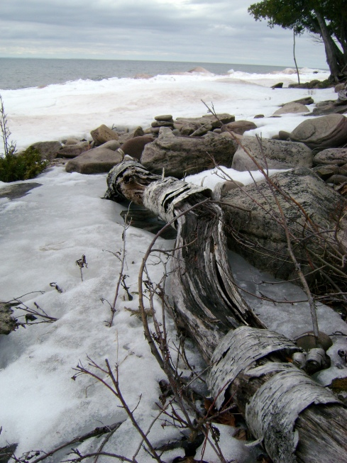A downed birch fellow rests among the rocks and snow