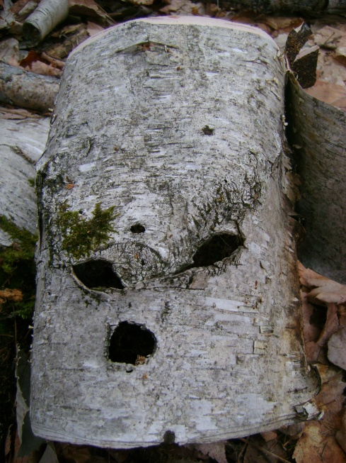 "Birch face says:  ""Don't sweat it.  Spring's coming soon."""