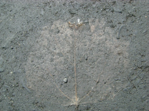 Leaf etched in mud.  OK, is anyone else excited about this?