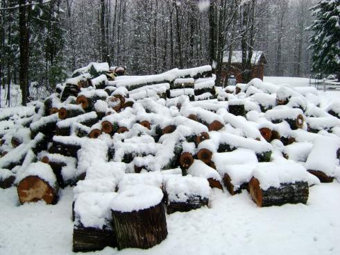 Next year's wood