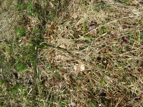 Common garter snake.  Can you see it?