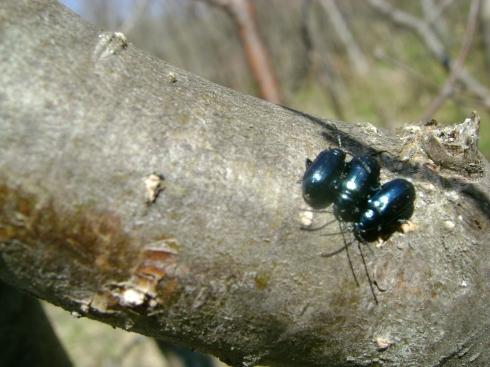 Three bugs on a tree