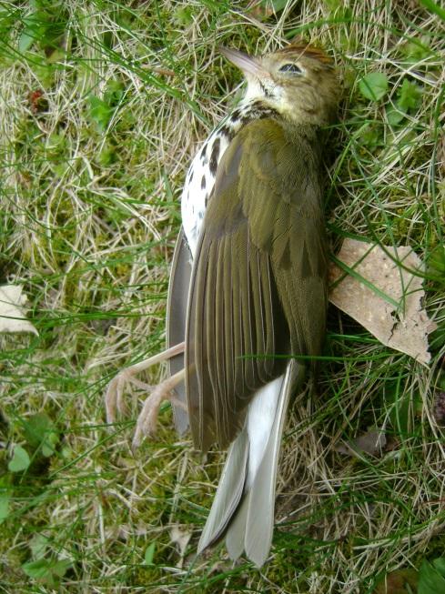 Dead Bird Opening The Door Walking Outside