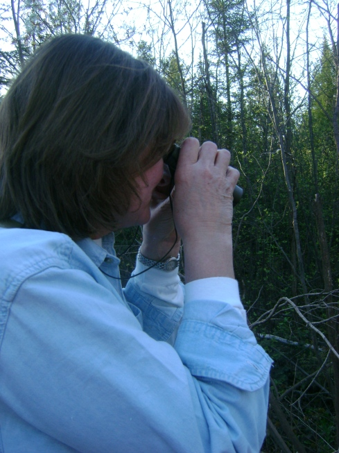 Sometimes you need binoculars to find little birds