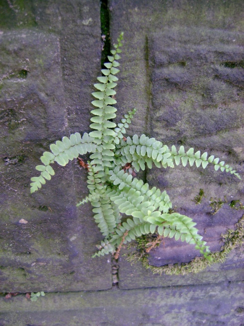 Fern growing up wall