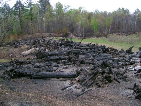 Graveyard for tree stumps