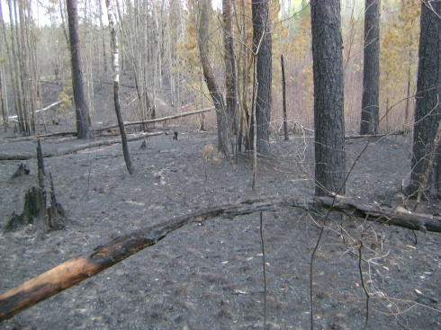 Forest fire ravages land