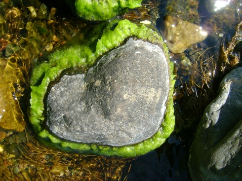 Heart shaped rock surrounded by seaweed