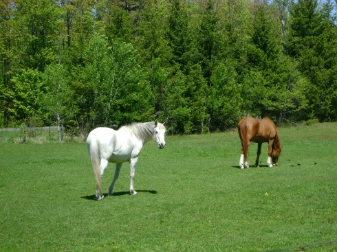 Aren't they lovely horses?