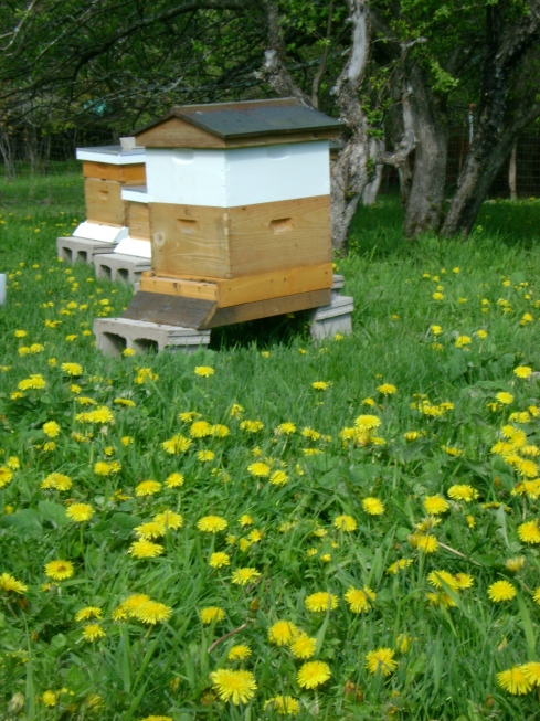 Organic honey for sale this summer!
