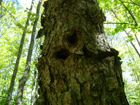 What do you see?  A face in a tree?  Rotting circles?  Woodpecker holes?