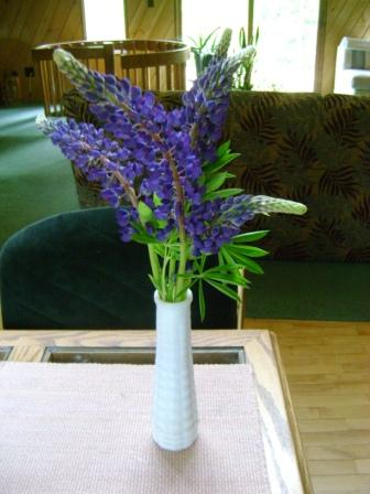 Birthday lupines in a vase