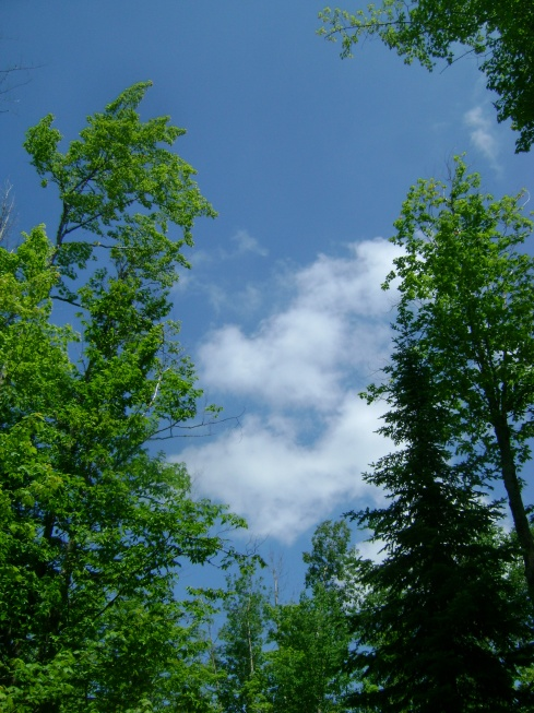 The blue, blue sky sandwiched in between the green, green trees
