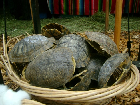 A bowl of turtle shells for sale