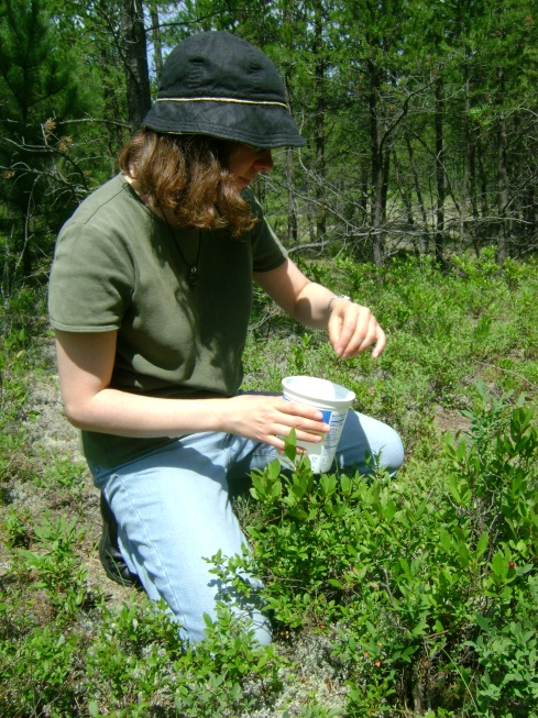 Amy picking blueberries near the Mouth of the Huron
