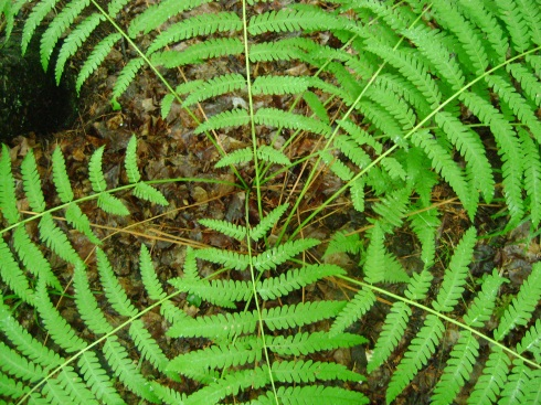 Fascinating inner circle of Fern