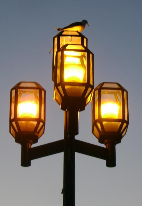 Seagull on lamp post