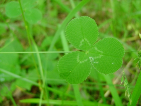 The wood element (three leaf clover) with its repeating circles
