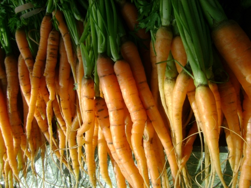 Lovely carrots fresh from the earth