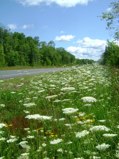 Wildflower heaven at the side of the road