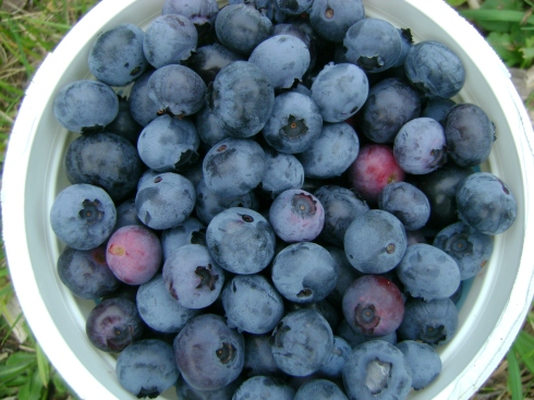 Quart of delicious berries