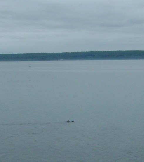 Loons on the lake.  If you squint, you'll probably see them.