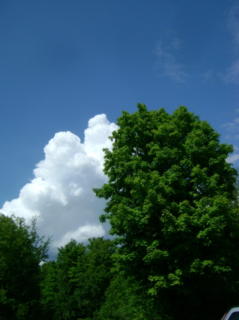 Blue blue sky with white white clouds and dark green trees