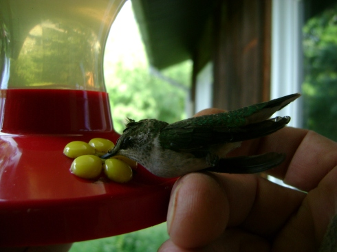 Please, hummingbird, eat...