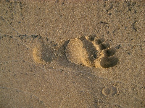 If that were your footprint, would you be diving in the cold water of Superior?