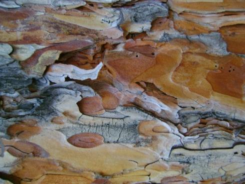 Red pine bark