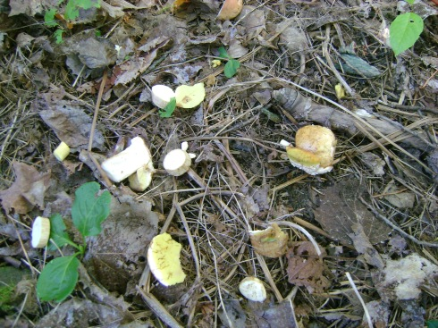 Wild mushrooms flung to the earth